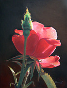 Photo Pastels Posters - Translucent Rose Poster by Nanybel Salazar