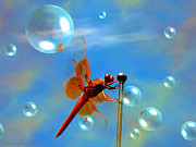 Joyce Dickens Metal Prints - Transparent Red Dragonfly Metal Print by Joyce Dickens