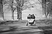 Horse And Wagon Photos - Transportation by Gabriela Insuratelu