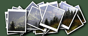 Fir Trees Digital Art Prints - Transylvania landscape Print by Odon Czintos