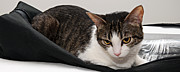 Whiskers Prints - Travel Studio Bag Cat Not Included Print by Andee Photography