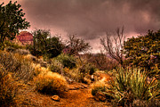 Las Vegas Prints - Traveling the Trail at Red Rocks Canyon Print by David Patterson
