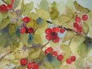 Northern Michigan Paintings - Traverse City Cherries by Sandra Strohschein