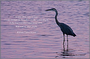 William Bryant Prints - Treading Alone   Great Blue Heron  Print by Jonathan Whichard