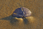 Beach Photographs Art - Treasure by Christopher  Ward