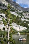 Mammoth Lakes Art - Treasure Lake Pine by Chris Brannen