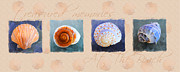 Sea Shell Painting Prints - Treasured Memories Sea Shell Collection Print by Jai Johnson