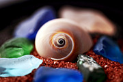 Seashell Art Prints - Treasures Print by John Rizzuto