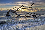Tree Roots Photo Prints - Treasures of the Sea Print by Debra and Dave Vanderlaan