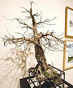 Nelbert  Flores - Tree 2 - 3D ECO ART 
