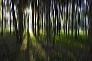 Trees Abstract Tree Lines Forest Wood Prints - Tree abstract Print by Sheila Smart