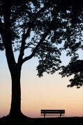 Sunset On The Lake Prints - Tree And Bench Silhouette Print by Darwin Wiggett