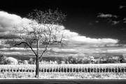 Jeff Holbrook - Tree and Corn Field