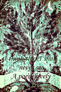 Susan Leggett Digital Art Metal Prints - Tree and Poem Metal Print by Susan Leggett