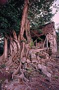 Tree Roots Photos - Tree and Ruins in Cozumel by Thomas Firak
