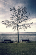 Benches Posters - tree at lake Constance Poster by Joana Kruse
