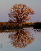 "\""reflection Photographs\\\"" Posters - Tree at Sunset Poster by About Light  Images"
