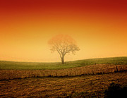 Rio Grande Posters - Tree At Sunset And Misty Poster by Antonello