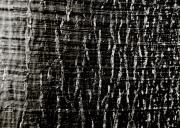 Tree Bark Print by Charmian Vistaunet