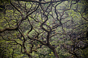 Lush Green Framed Prints - Tree Branches Form An Abstract Pattern Framed Print by Taylor S. Kennedy