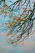 Autumn Landscape Art - Tree branches in autumn by Gabriela Insuratelu
