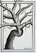 Border Drawings - Tree Branches out by Anthony Nold