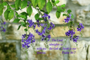 Bible Photos - Tree Branches with Purple Flowers Ps.46 v 7 by Linda Phelps
