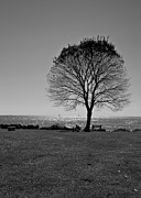 Edward Myers - Tree by the Sea in BW