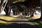 Tomales Bay Prints - Tree Canopy Promenade Road Drive . 7D9959 Print by Wingsdomain Art and Photography