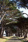 Point Reyes National Seashore Acrylic Prints - Tree Canopy Promenade Road Drive . 7D9963 Acrylic Print by Wingsdomain Art and Photography