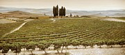 Vineyard Landscape Prints - Tree Circle - Tuscany  Print by Trevor Neal