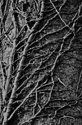 Mark Giarrusso - Tree Detail