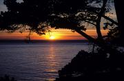 Overhang Photo Metal Prints - Tree Framing Seascape Sunset Metal Print by Ali ONeal - Printscapes