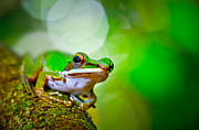 Tree Frog Print by Albert Tan photo