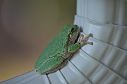 Zach Edlund Prints - Tree Frog Print by Zach Edlund