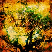 Best Sellers - Featured Art - #tree #green #yellow #colourful #sc by Katie Williams
