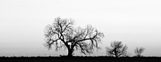 Tree Harmony Black And White Print by James Bo Insogna