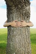 Interlocked Photo Framed Prints - Tree Hugger 1 Framed Print by Brandon Tabiolo - Printscapes