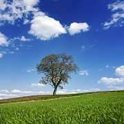 Tree In A French Landscape Print by Bernard Jaubert