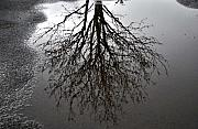 Puddle Posters - Tree in a Puddle Poster by Marilynne Bull