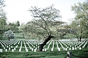 Tombstones Posters - Tree in Arlington Cemetery  Poster by Scott Sawyer