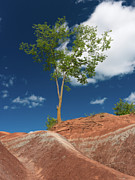 Soil Photo Posters - Tree in Badlands Poster by Oleksiy Maksymenko