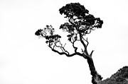 Yurix Prints - Tree in Black and White Print by Yurix Sardinelly