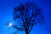 Tree In Blue Sky Print by Silvia Ganora