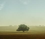 Landscape In Israel Prints - Tree in fog Print by Benny  Woodoo