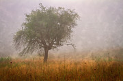 Tennessee Farm Posters - Tree in Fog Poster by Debra and Dave Vanderlaan