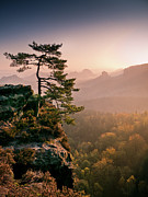 Autumn Landscape Framed Prints - Tree In Morning Llght In Saxon Switzerland Framed Print by Andreas Wonisch