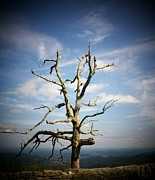 Shenandoah Valley Posters - Tree in Shenandoah National Park Poster by Joyce  Kimble Smith