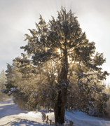 Wayne Oberparleiter - Tree in Snow with God...