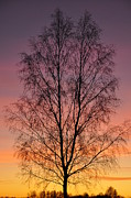 Outside Pyrography - Tree in sunset by Conny Sjostrom